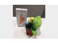 iphone-6s-original-gdyd-mtbrshm-no-active-small-1