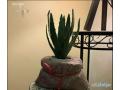 natural-spirit-vase-small-1