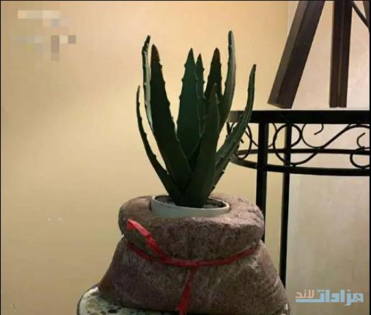 natural-spirit-vase-big-1