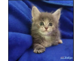 kittens-avaiable-small-1