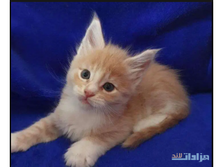 Kittens avaiable
