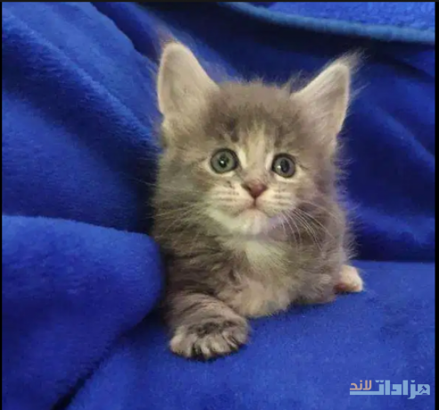 kittens-avaiable-big-1