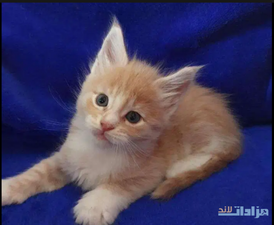 kittens-avaiable-big-0