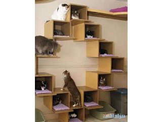 Cat House Pets Design Ideas