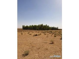 ارض زراعيه للبيع في الشمال مساحتها 60 الف متر