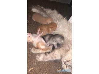 » قطة جميلة مع اولادها للتبني مكه
