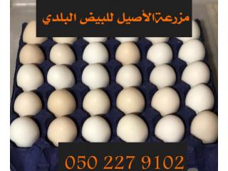 بيض بلدي عضوي للأكل طازج ونظيف