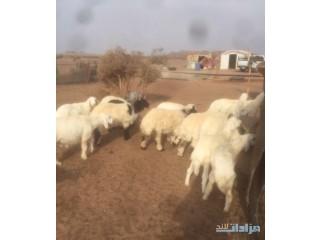 » شمال شرق مهد الذهب ب120ك الرياض